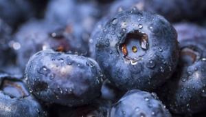 Blueberries Photos