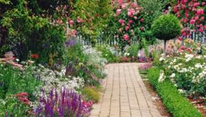 Garden Flower Photos