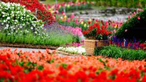 Garden Flower Wallpapers Hd