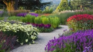 Garden Flower Widescreen