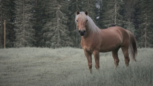 Horse High Quality Wallpapers