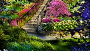 Pictures Of Garden Flower