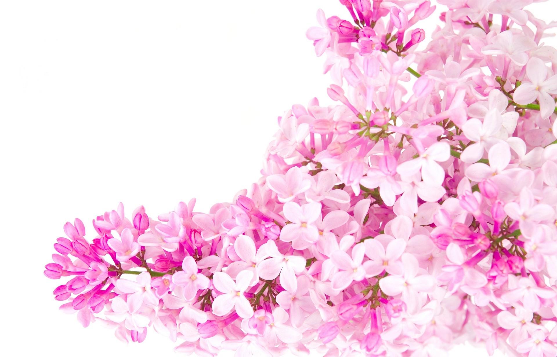 Pink Flower Computer Wallpaper