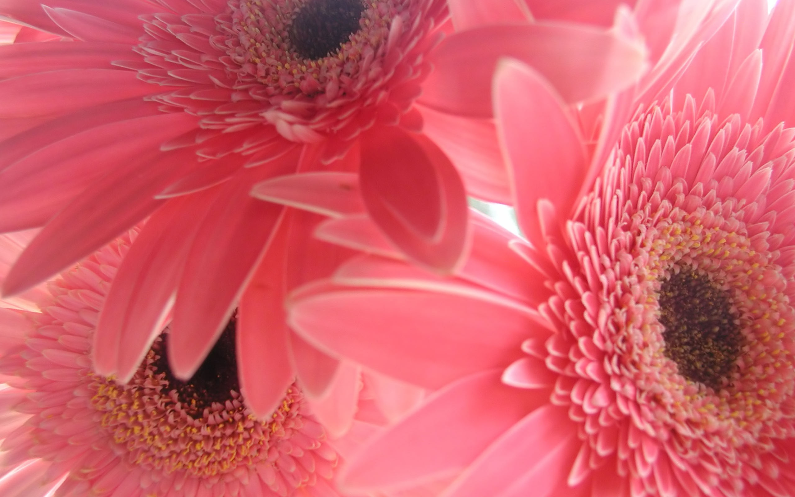 Pink Flower Pictures