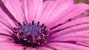 Pink Flower Full Hd