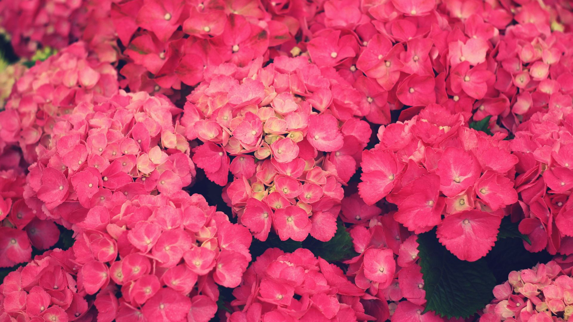 Pink Images