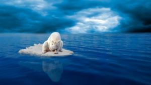 Polar Bear Desktop Images