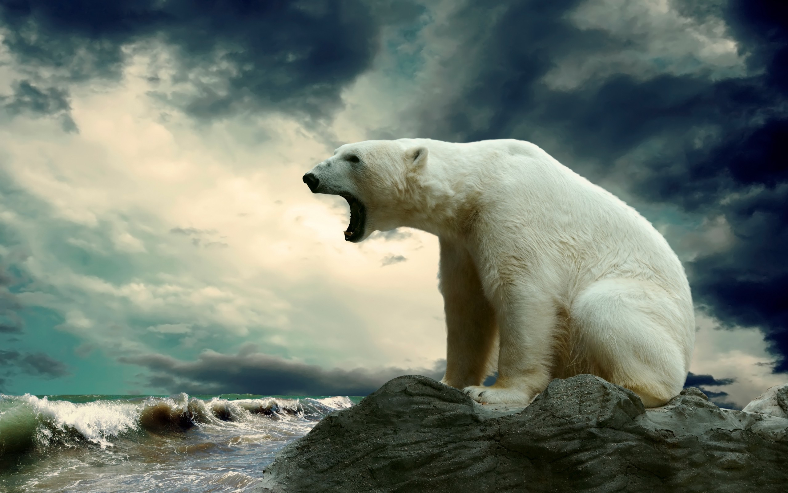 Polar Bear For Desktop