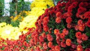 Autumn Flower Hd