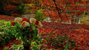 Autumn Flower Images
