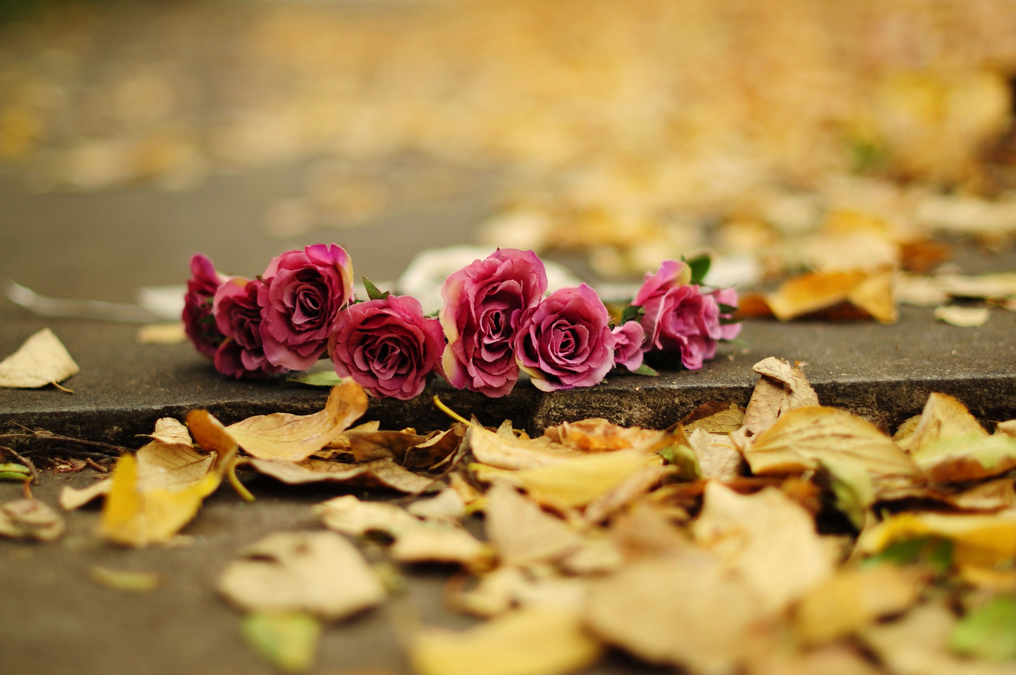 Autumn Flower Wallpaper