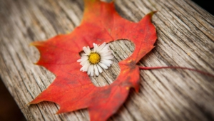 Autumn Flower Wallpapers Hd