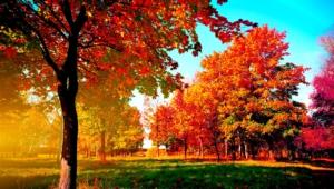 Autumn Hd Background