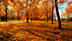 Autumn High Definition Wallpapers