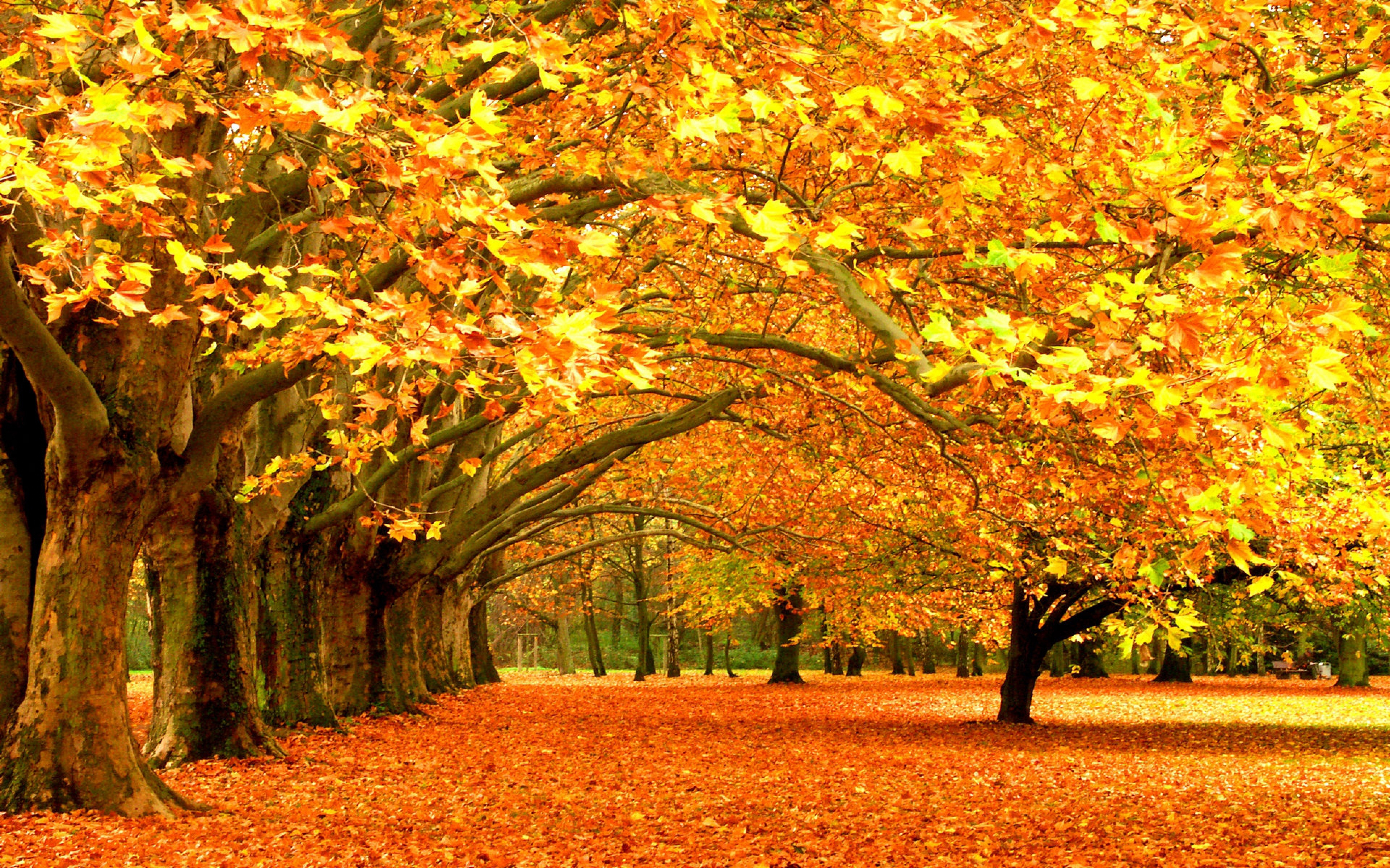 Autumn High Quality Wallpapers