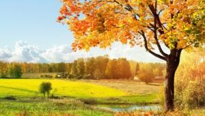 Autumn Widescreen