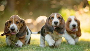 Basset Hound High Definition Wallpapers
