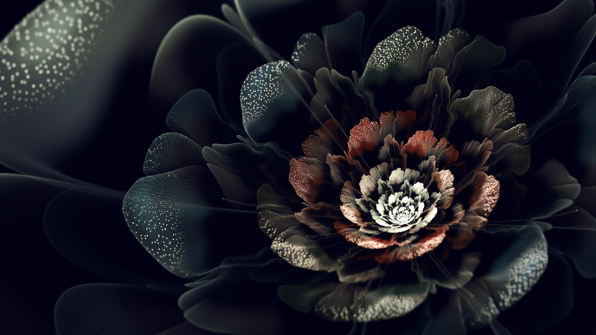 Black Rose Computer Wallpaper