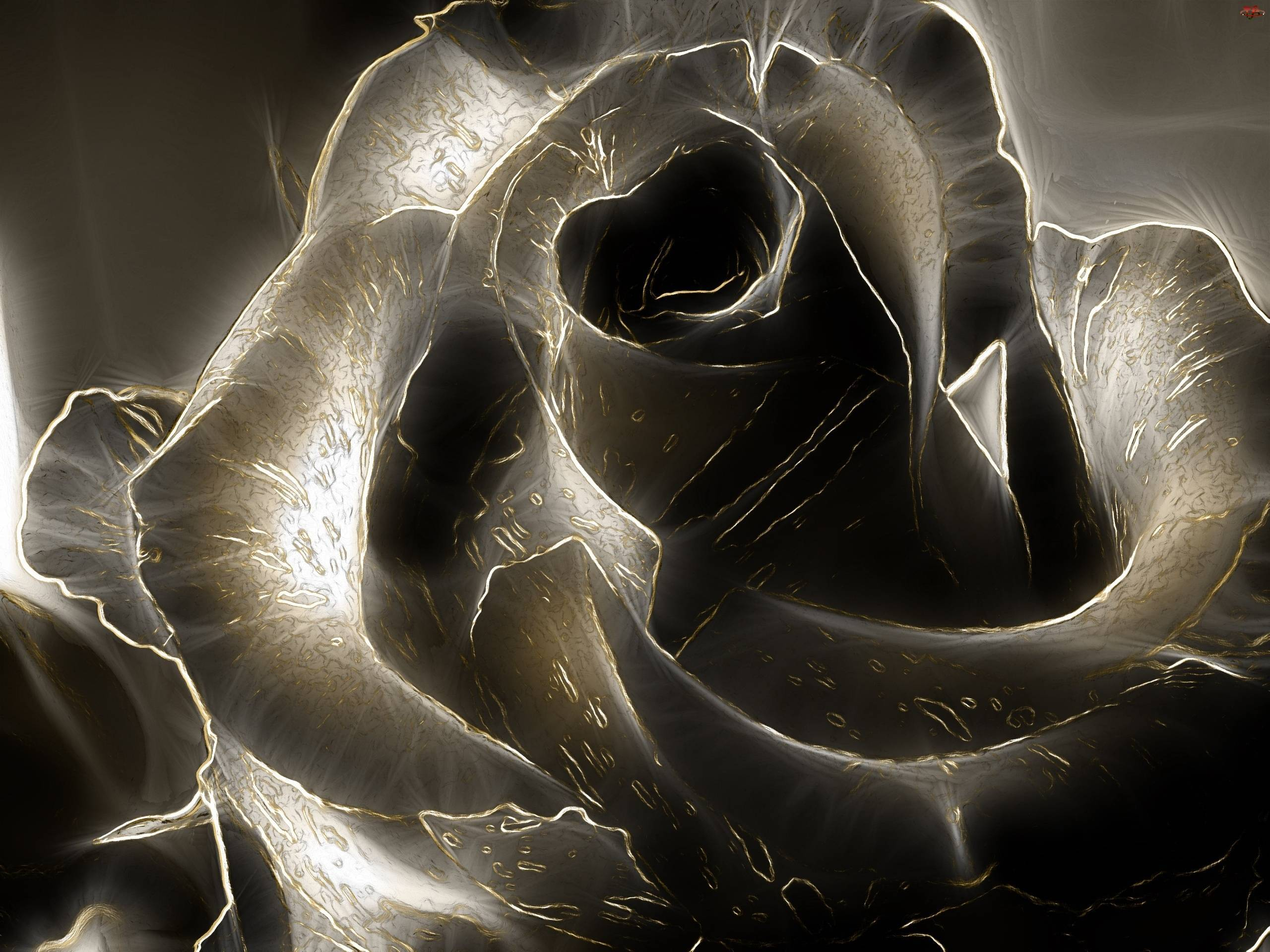 Black Rose Hd Desktop