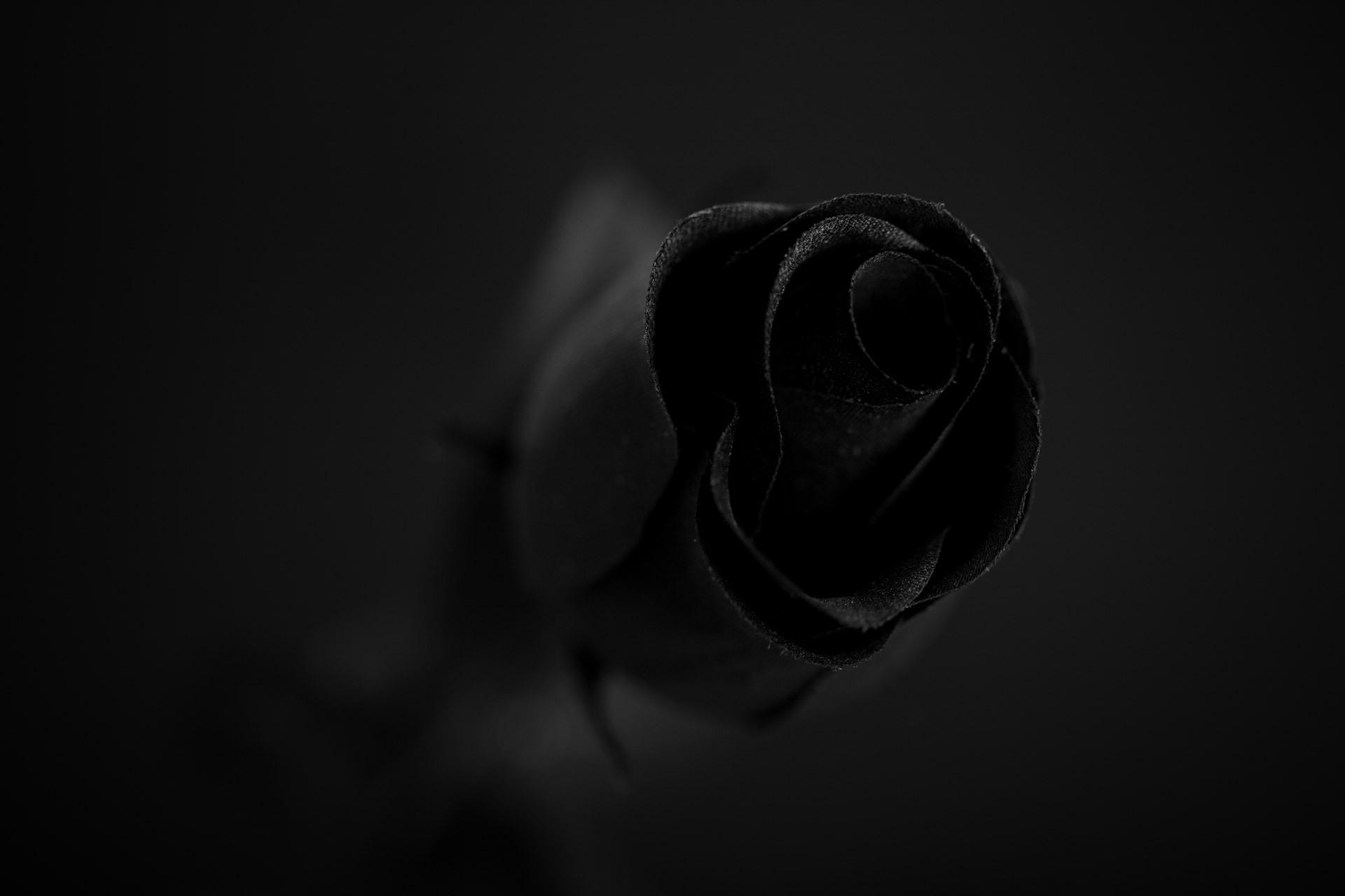 Black Rose Images