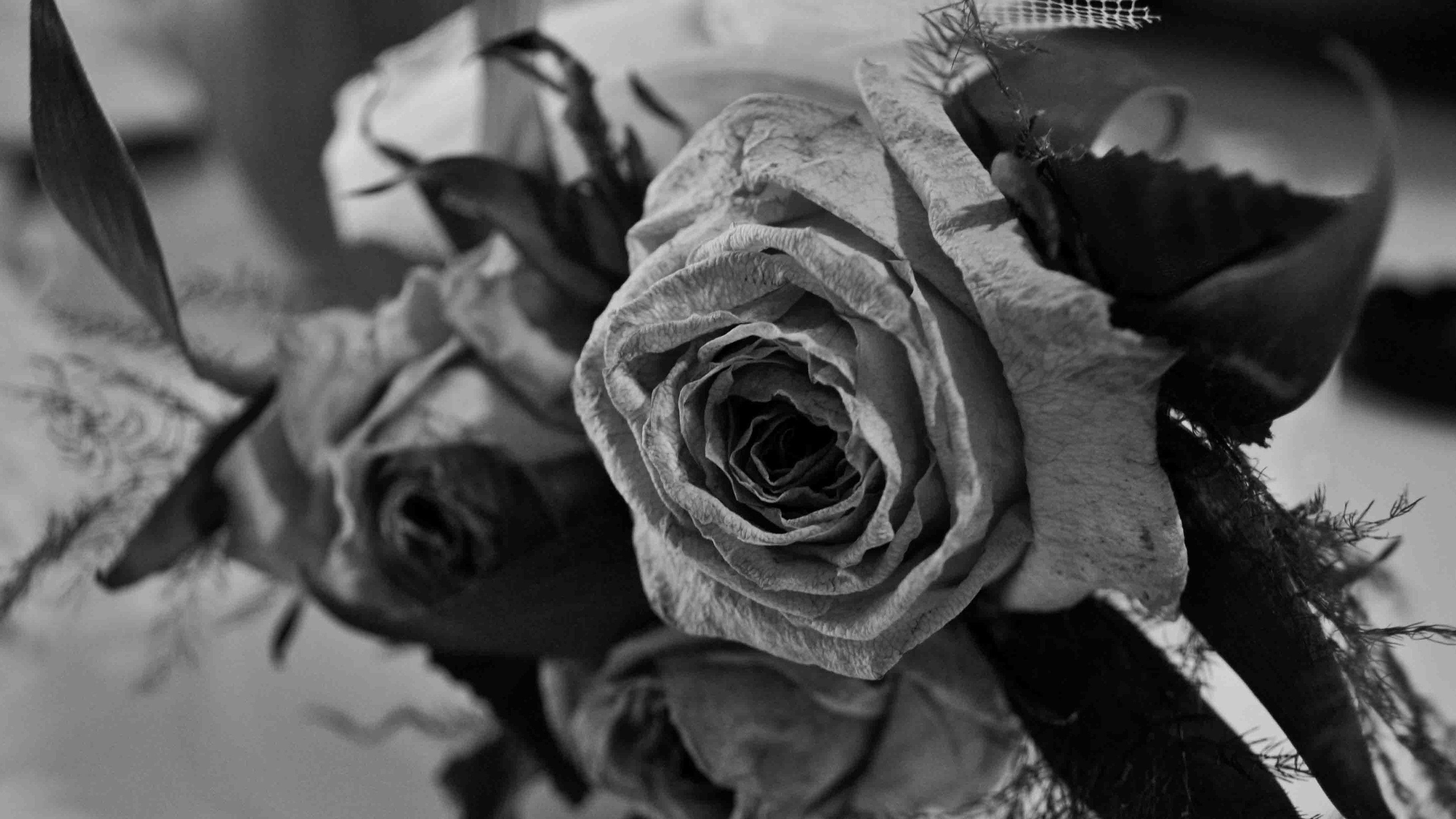 Black Rose Photos