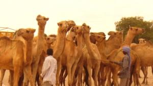 Camel Desktop
