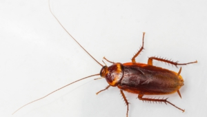 Cockroach High Definition Wallpapers