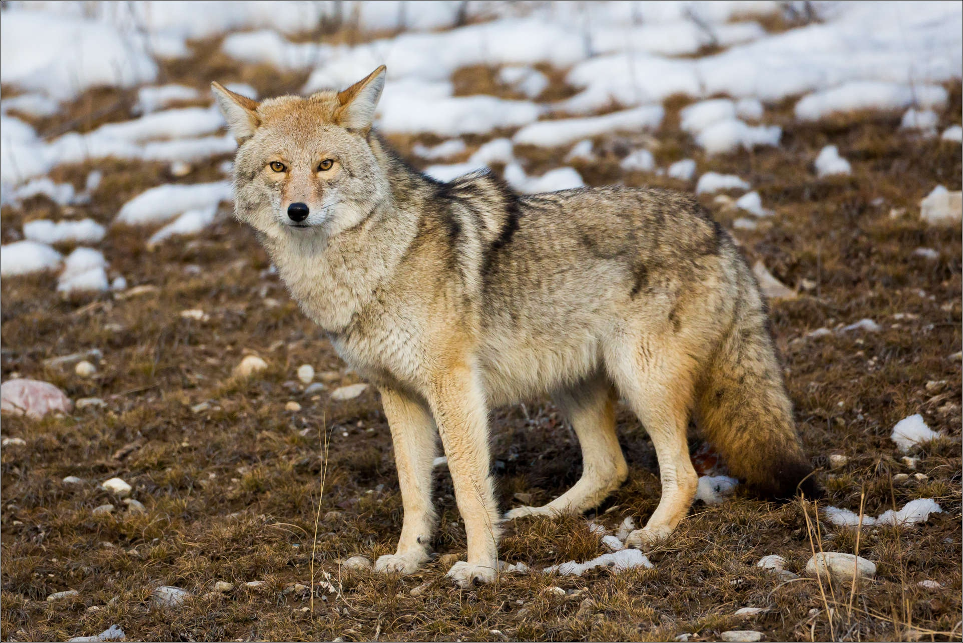Coyote Pictures