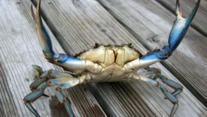 Crab Images