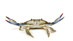 Crab Pictures