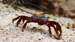 Crab Wallpapers Hd