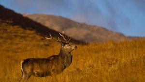 Deer Desktop