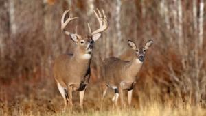 Deer Images