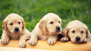 Dog High Quality Wallpapers