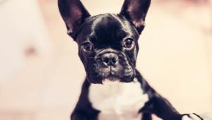 Dog Widescreen
