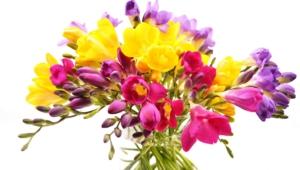 Flower Bouquet High Definition Wallpapers