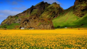 Flower Fields Download