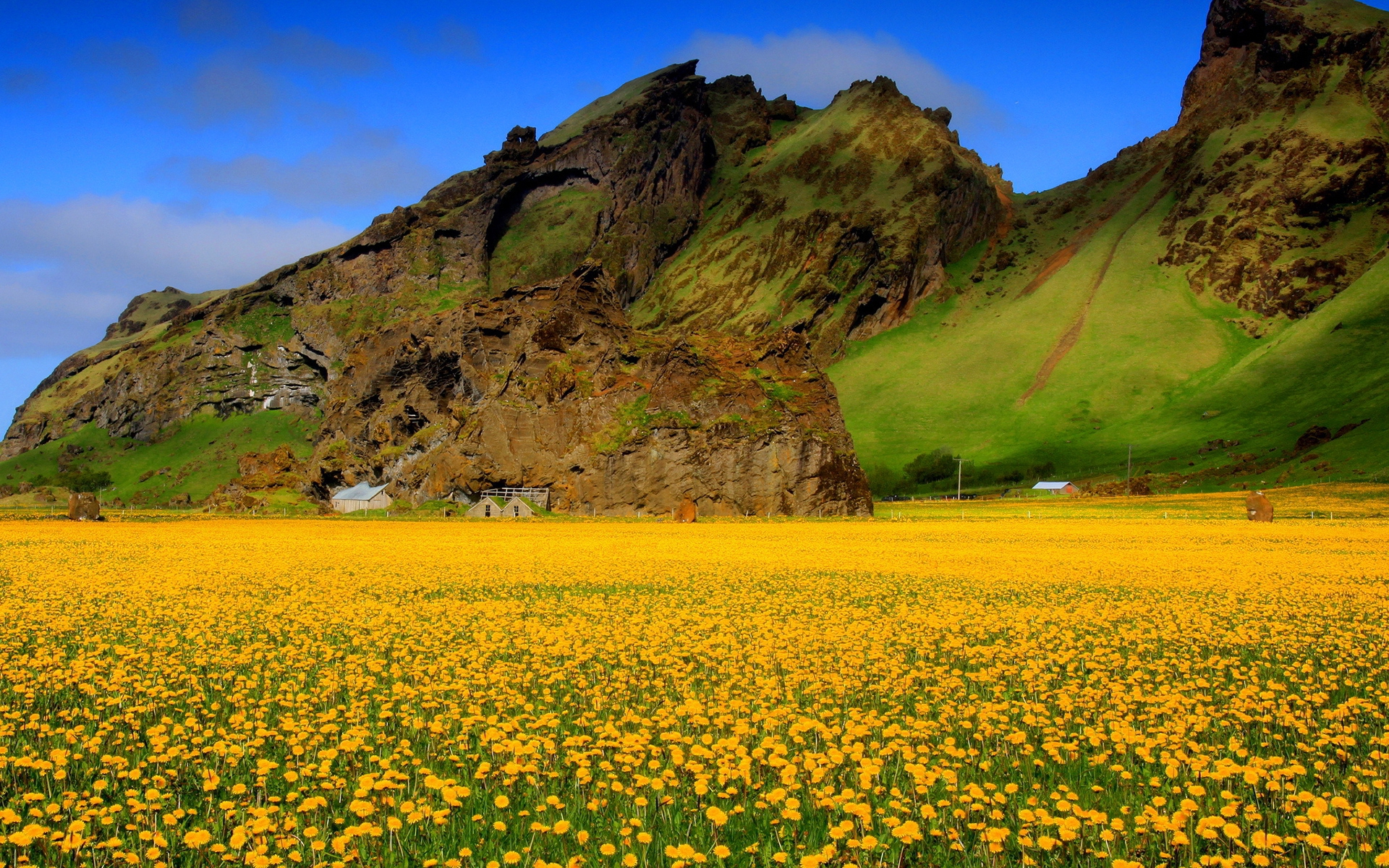 Flower Fields Download