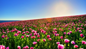 Flower Fields Hd Desktop