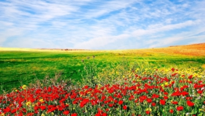 Flower Fields Hd Wallpaper