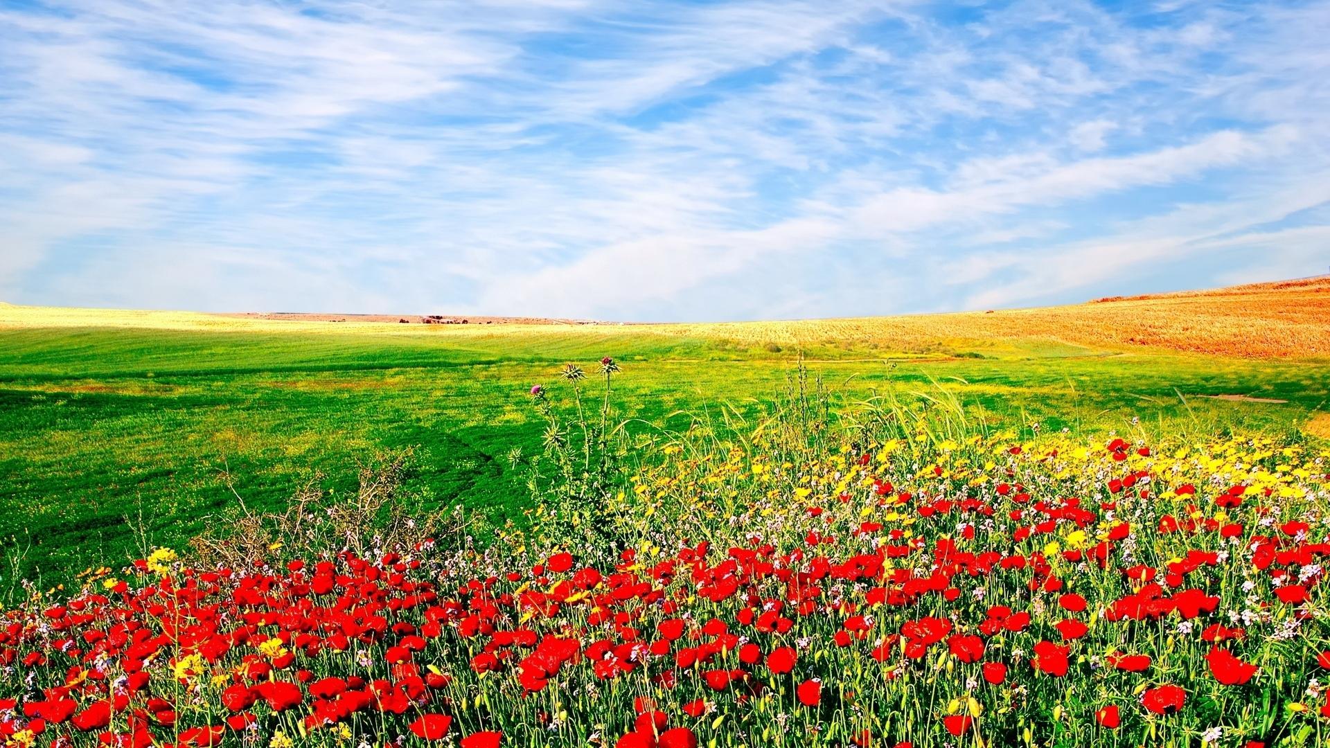 Flower Fields Hd Wallpaper