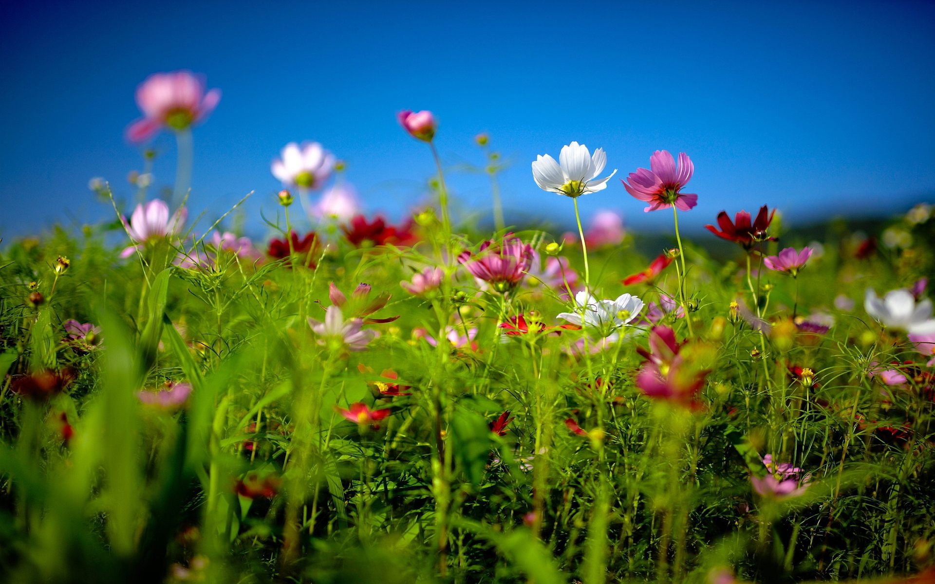 Flower Fields High Quality Wallpapers