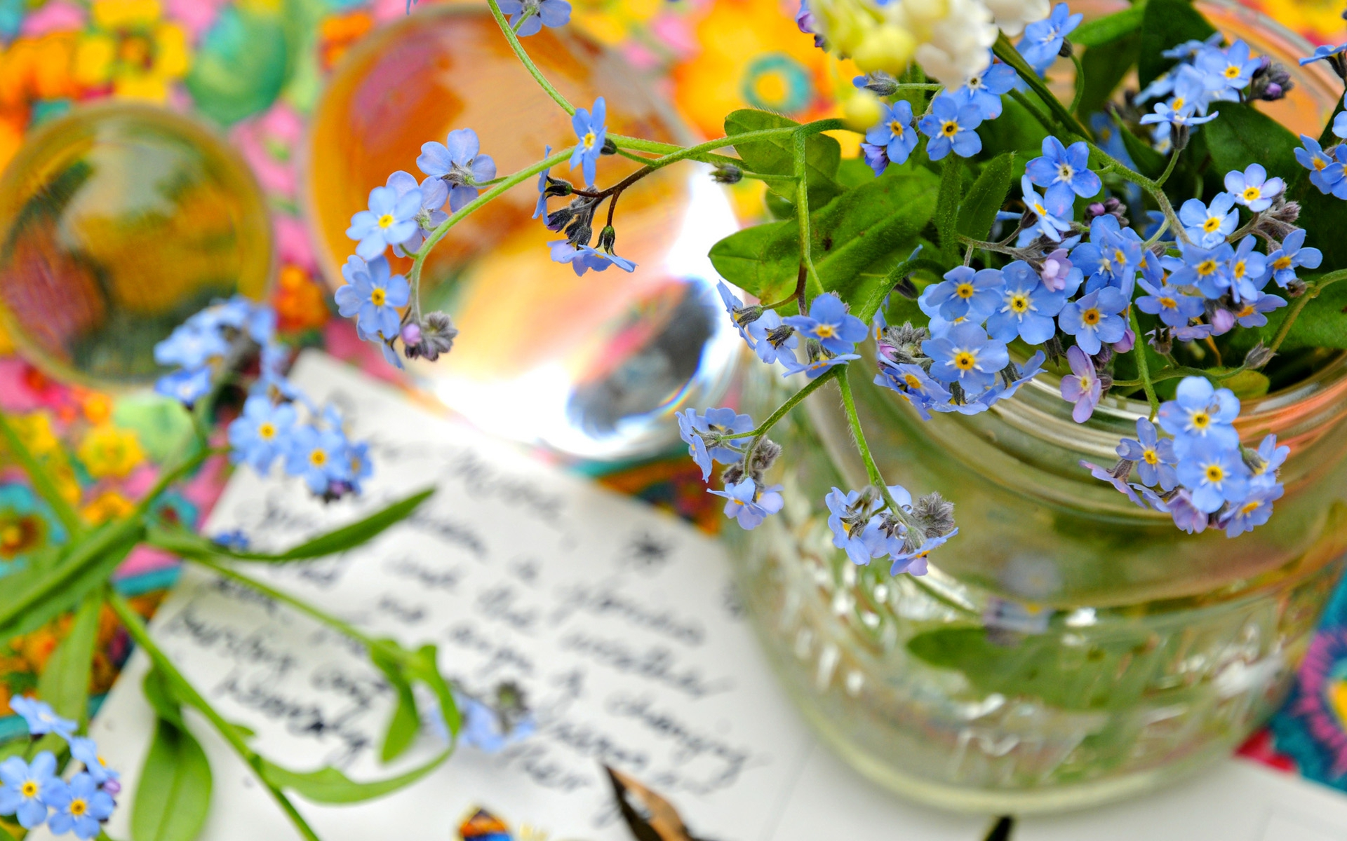 Forget Me Not Flower Hd Background