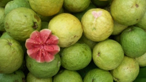 Guava Pictures