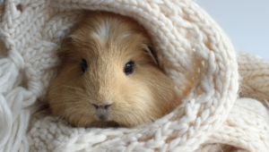 Guinea Pig Desktop Wallpaper