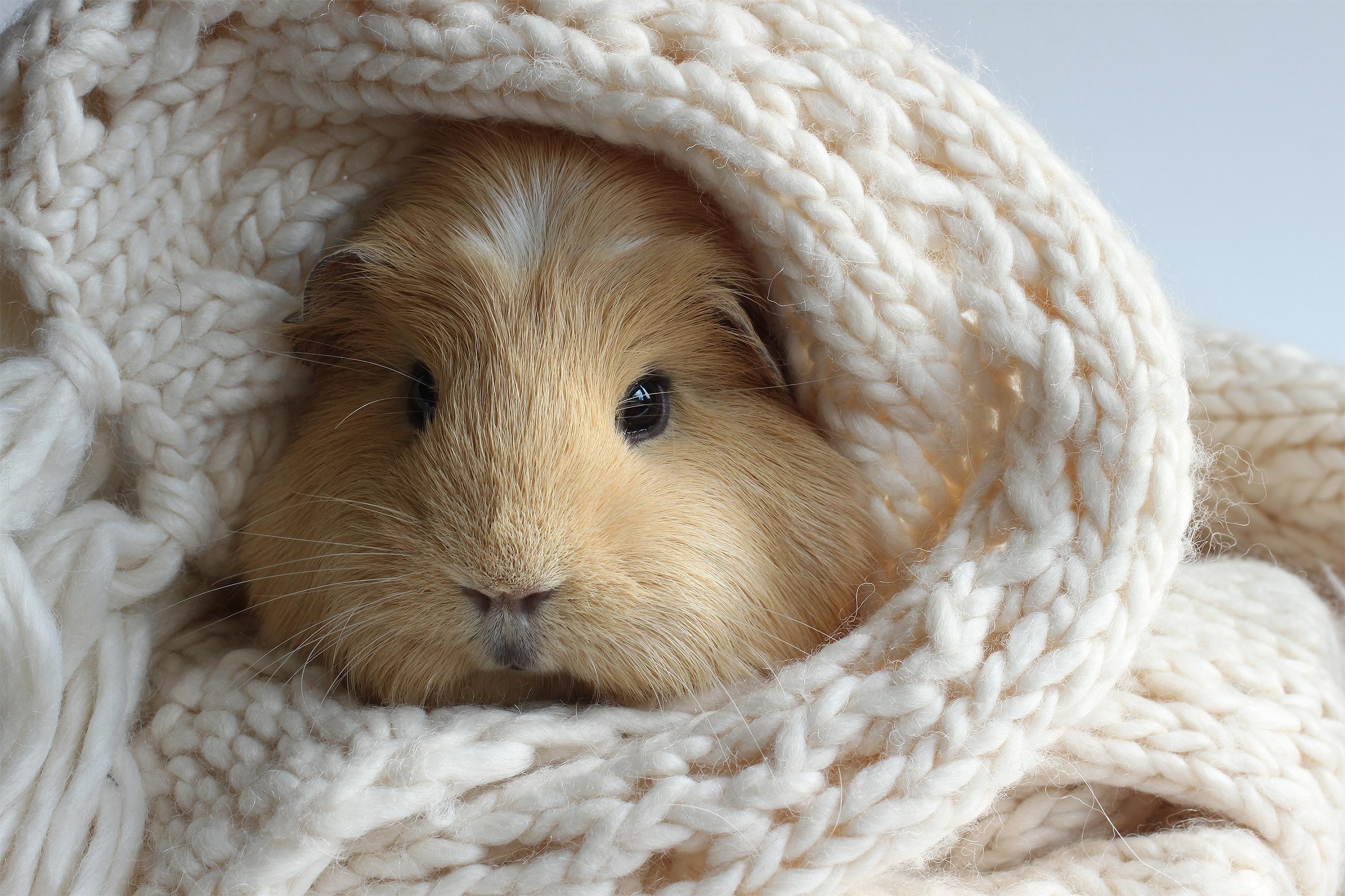 Guinea Pig Desktop Wallpaper