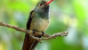 Hummingbird Background