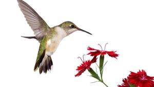 Hummingbird Desktop