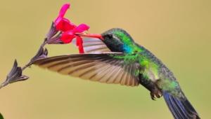 Hummingbird Download