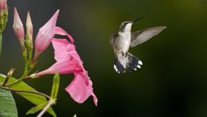 Hummingbird High Definition Wallpapers